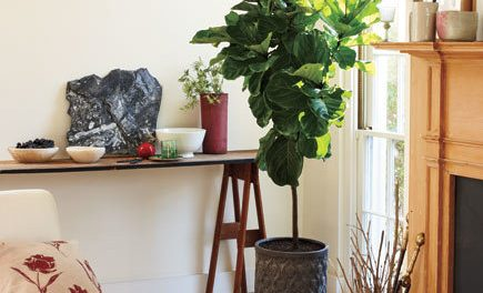 Seven Creative Ideas to Enhance Your Home with House Plants